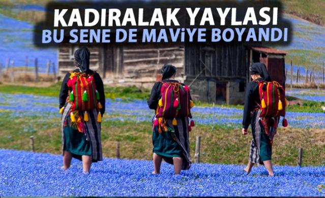 Trabzon'un Tonya ilçesindeki Kadıralak Yaylası'nda Mavi Yıldız Çiçekleri açtı.