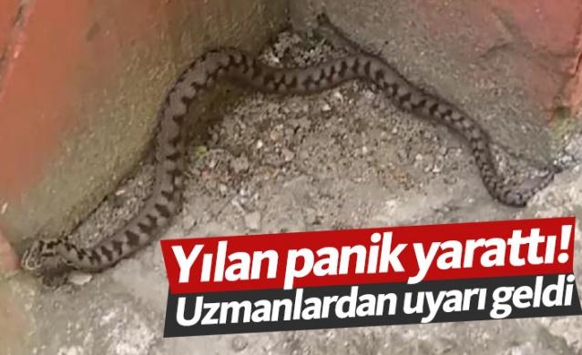 RİZE'nin Hemşin ilçesinde, Türkiye'de endemik olan ve nesli tükenme tehlikesi altındaki hayvanlar listesinde asgari risk kategorisinde yer alan zehirli 'baran engereği' yılanı görüldü.