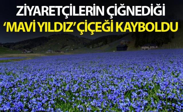 Trabzon'un Tonya ilçesi Kadıralak Yaylası'nda yetişen ve Uluslararası Bern Sözleşmesi'nce koruma altında olan 'Mavi Yıldız' çiçeğini görmeye gelenler ve yaylada etkinlik düzenleyenlerin üzerine basması ve otomobille çiğnemesi sonucu kısa sürede kayboldu. Türkiye'nin korumakla yükümlü olduğu endemik bitkiler arasında yer alan ve yok olma tehlikesi bulunan, ince ve uzun yapraklı çiçek türüne zarar verilmesi, tepkilere neden oldu.