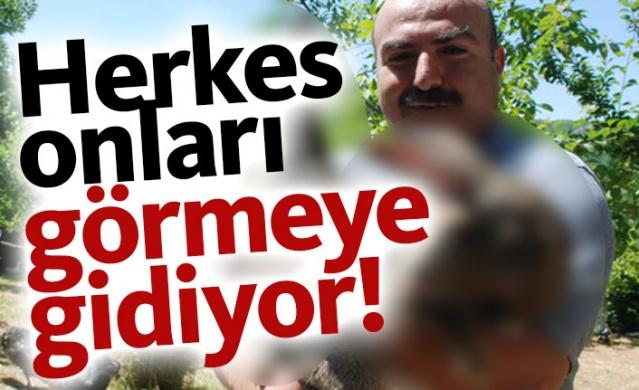 Tokat'ta evinin bahçesinde çeşitli türlerde evcil hayvan besleyen Mehmet Bingöl'ün beslediği 'velikan' cinsi tavşan, büyüklüğü ile dikkat çekiyor.