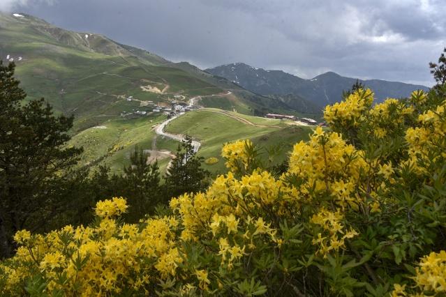 Zigana Dağı'nda renk cümbüşü