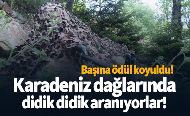 Karadeniz dağlarında didik didik aranıyorlar!