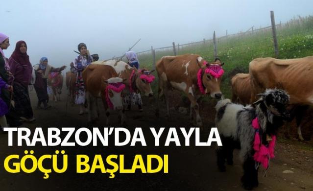 Trabzon'da yayla göçü başladı