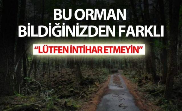 Bu orman bildiğinizden farklı!