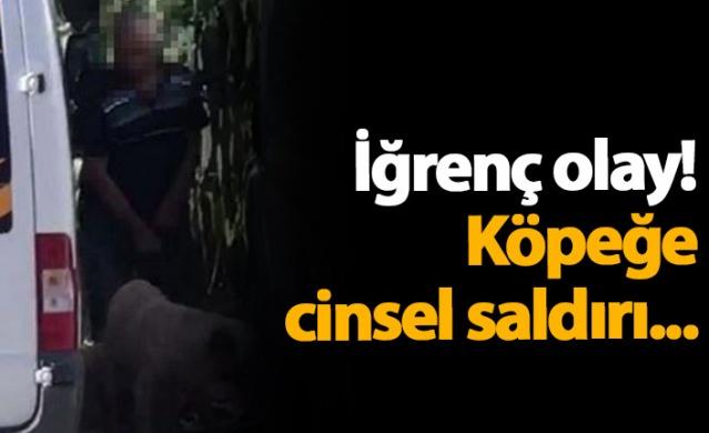 Antalya'da, ismi açıklanmayan bir kişi, sokakta köpeğe cinsel saldırıda bulunurken yoldan geçen kişi tarafından görüntülendi. Sosyal medyada paylaşılan görüntüler üzerine harekete geçen polisin yakaladığı şüpheli, savcılığa sevk edildi.