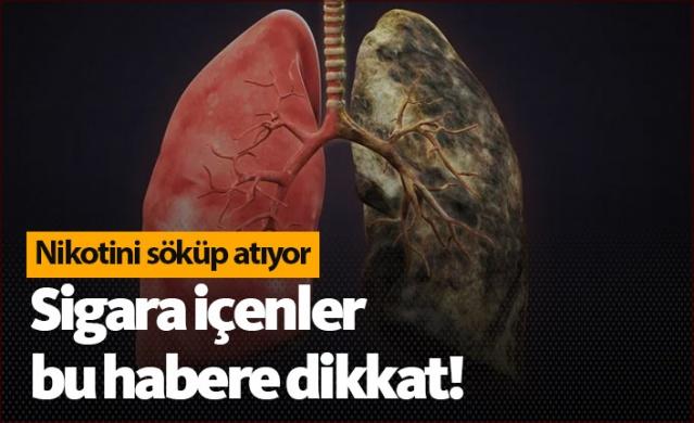 Bu besinler nikotini vücuttan atıyor