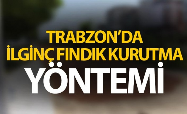 Trabzon'da ilginç fındık kurutma yöntemi