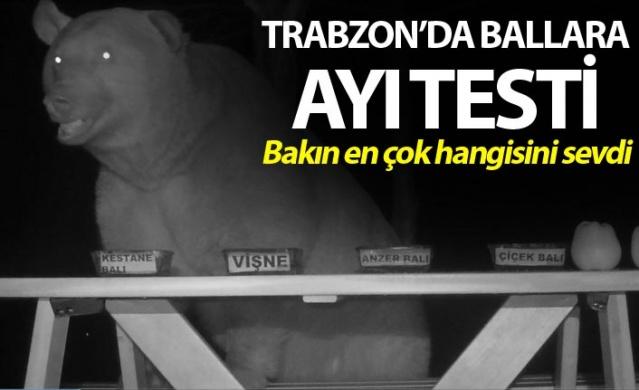 Trabzon'da ballara ayı testi