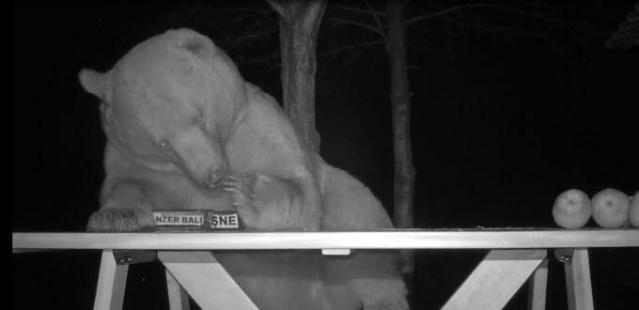 Kovanlarını korumak için açık alana bal, ekmek ve meyve bırakan, kovanları konteyner üzerine taşıyıp çelik kafesle önlem alan Sedef, ağaçlardan tırmanarak ulaştıkları peteklere de musallat olan ayıları, teste tabii tuttu. Sedef, elinde bulunan 4 çeşit balı, kalitesini ayılara ölçtürmek için açık alanda masanın üzerine yerleştirdi, olan biteni de foto kapan kameralarınca kayda aldı.