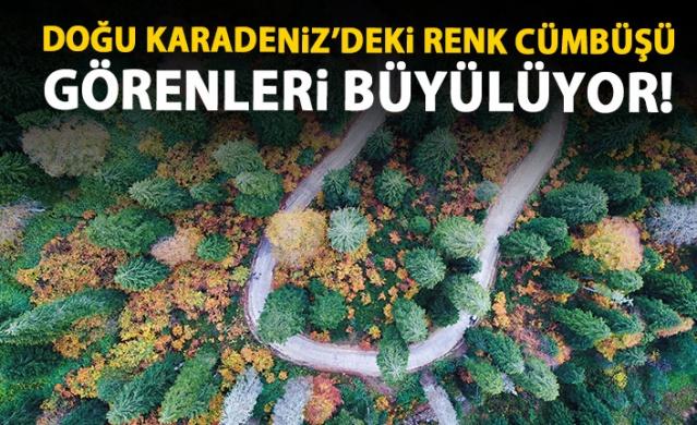 Karadeniz'de doğal ağaç müzesi büyülüyor