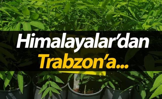 Himalayalar'dan Trabzon'a...
