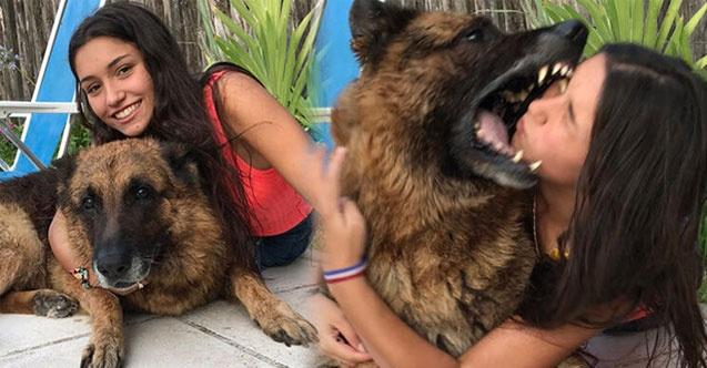 Birlikte fotoğraf çektirmek istediği köpek kabusu oldu. İşte genç kızın son hali...