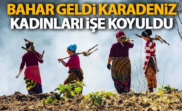 Karadeniz kadınları işe koyuldu