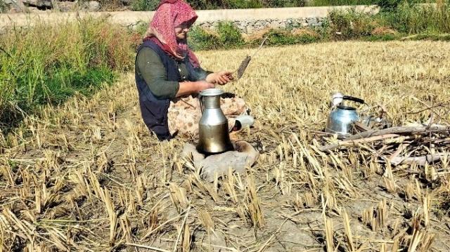 Sular altında kalacak Yusufeli'nde son hasat yapılıyor