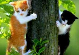 'Kedilerim olmadan yaşayamam'