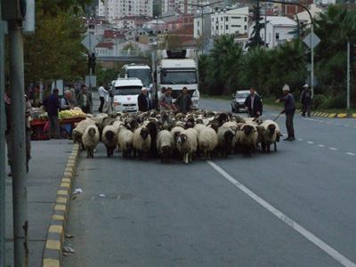 Karadeniz'de göçler başladı