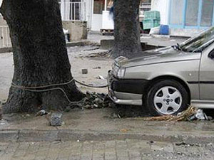 Otomobilleri ağaca bağladılar!