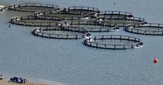 Sulama kanallarında balıkçılık!