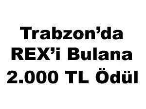 Trabzon'da Rex'i bulana 2.000 TL.ödül