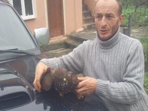 Trabzon'da yaralı atmaca bulundu