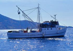 Balıkçılar beklenmedik sürprizle karşılaştı