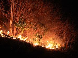 4 hektar ormanlık alan zarar gördü
