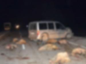 Trabzon'da arabayla koyun sürüsüne çarptı