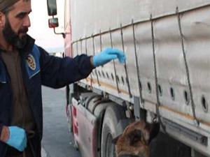 Narkotik köpeği Nil 120 kilogram esrar buldu