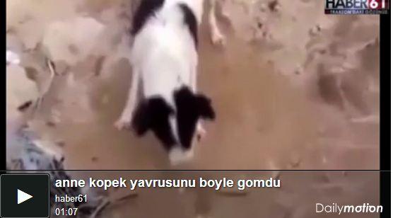 Anne köpek, yavrusunu böyle gömdü Video
