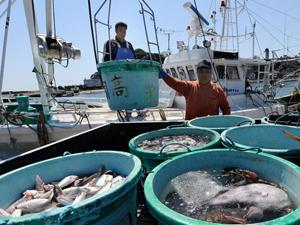 Balıklarda 124 kat fazla radyasyon