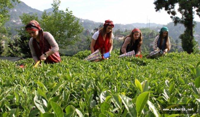 Çay üreticilerine müjdeli haber