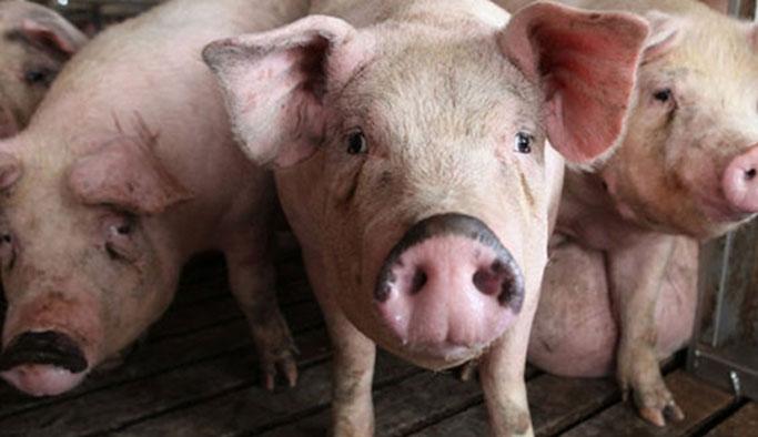 Cami kapısına domuz pastırması koyan adam öldü