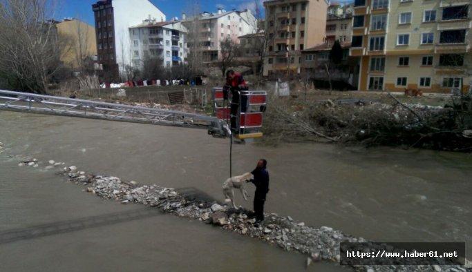 Nehirde mahsur kalan köpekleri itfaiye kurtardı