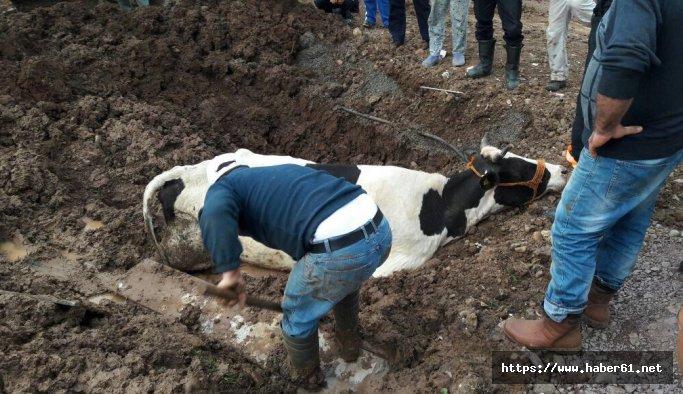 Çamura batan ineği itfaiye kurtardı