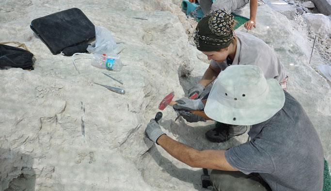9 milyon yıllık fosiller gün yüzüne çıkarılıyor
