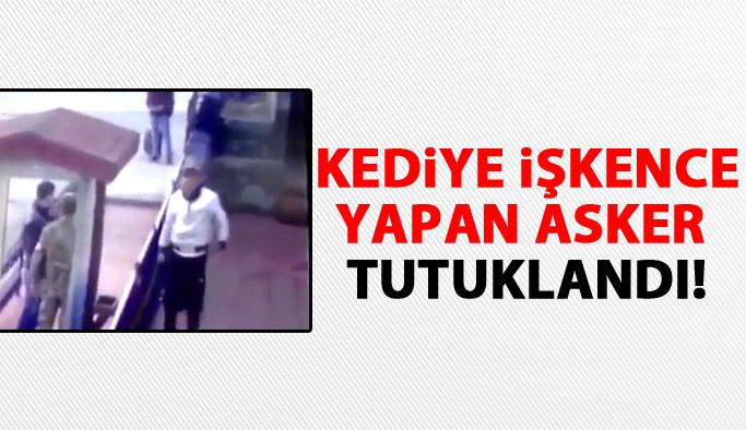 Erzincan'da kediye işkence yapan asker tutuklandı ama...