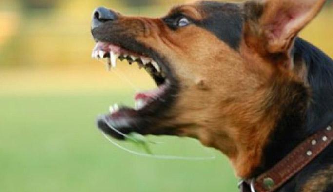 Köpek ısırınca dava açtı, 7 Bin Lira aldı