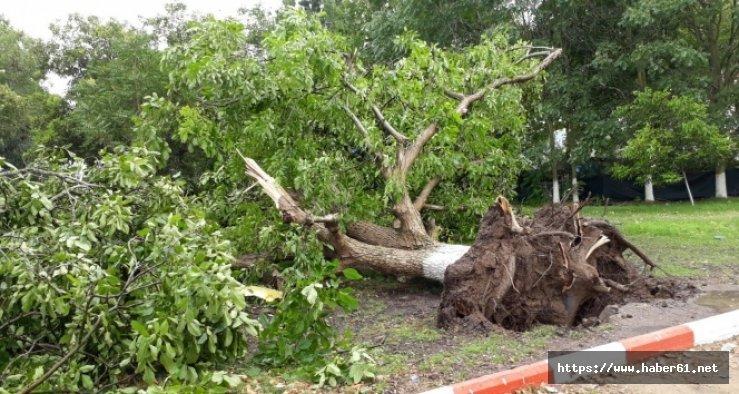 Komşusunun ağacını söktü, hapis cezasına çarptırıldı