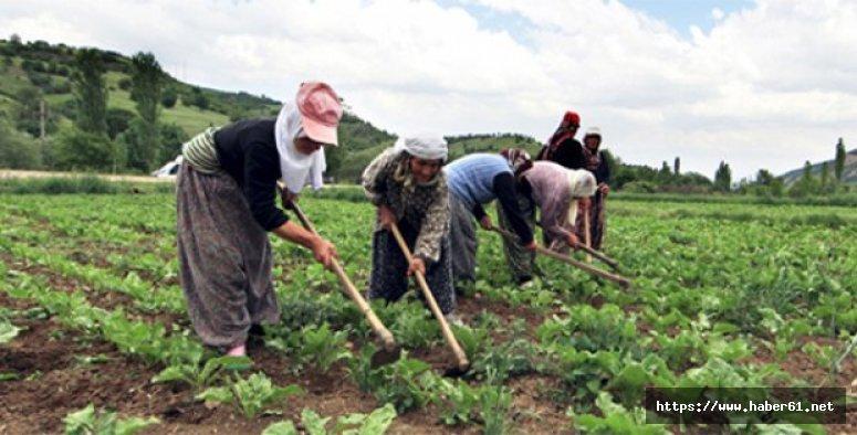 Tarımın yükünü kadınlar çekiyor