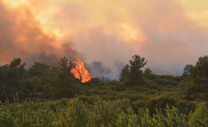 Korkutan orman yangını! Ekipler alevlere müdahale ediyor