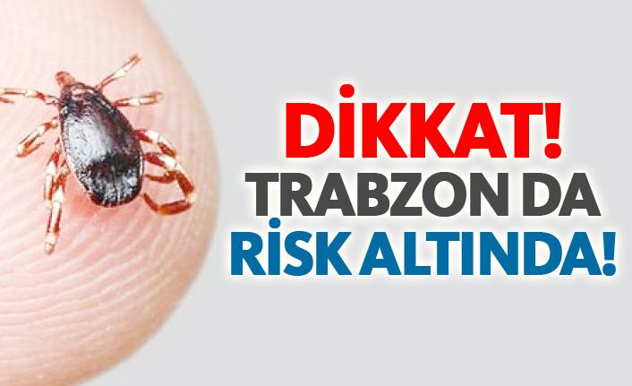 Trabzon da kene riski altında