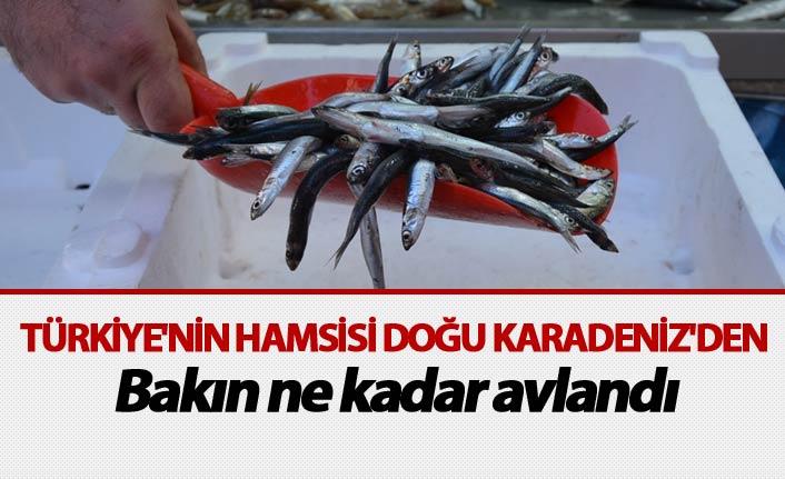 Türkiye'nin Hamsisi Doğu Karadeniz'den - Bakın ne kadar avlandı