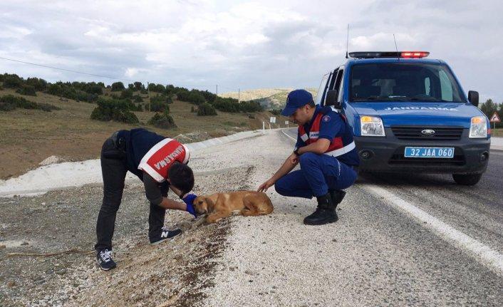 Jandarma, yaralı köpeğin hayatını kurtardı