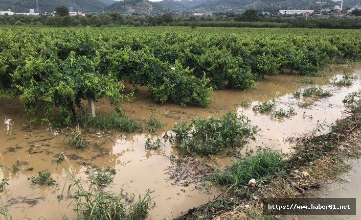 Üzüm bağları sular altında kaldı