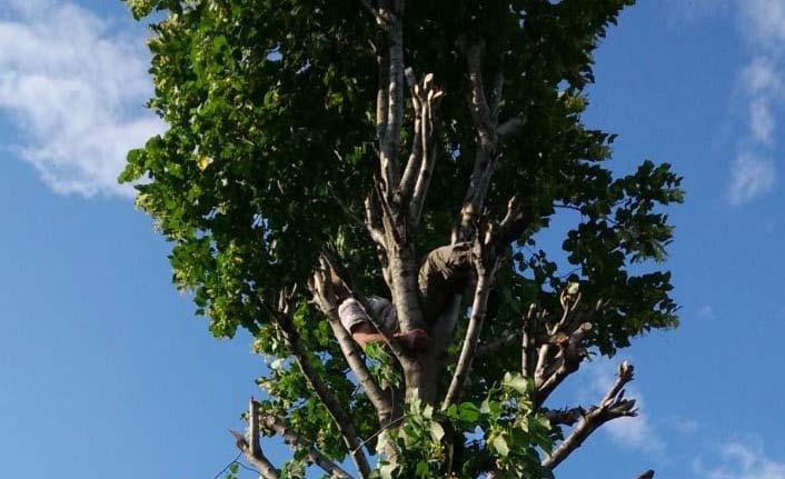 Ihlamur ağacında feci ölüm