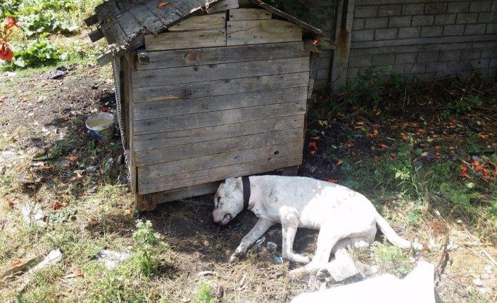 Vahşet! Köpeği susturuculu silahla başından vurdular