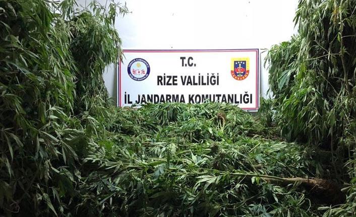 Rize'de kenevir ve kaçak sigara operasyonu