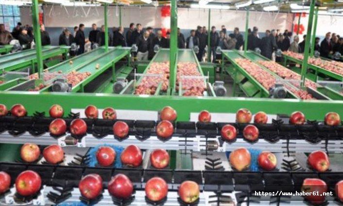 Siirt'ten dünyaya elma ihracatı