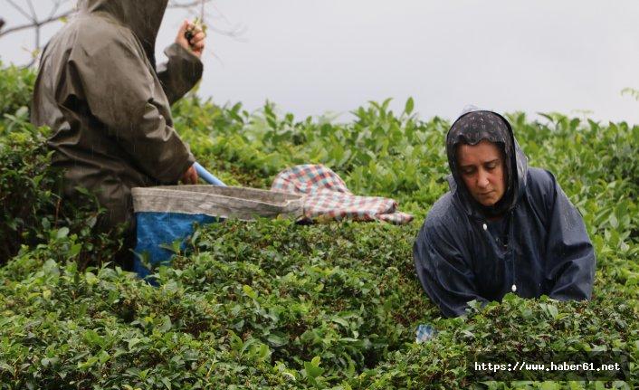 Çay sezonunu kemençe ve horon eşliğinde sonlandırdılar