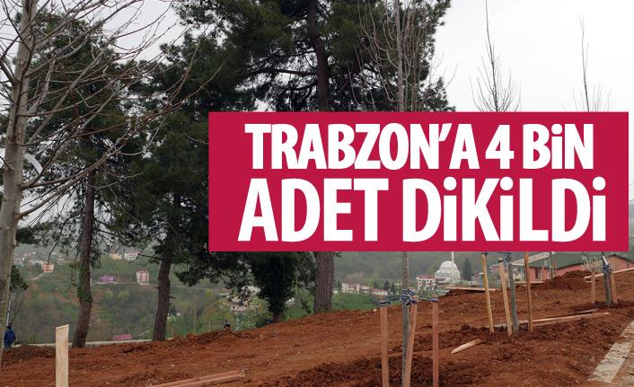 Trabzon'a 3 milyon yeşil bitki dikildi